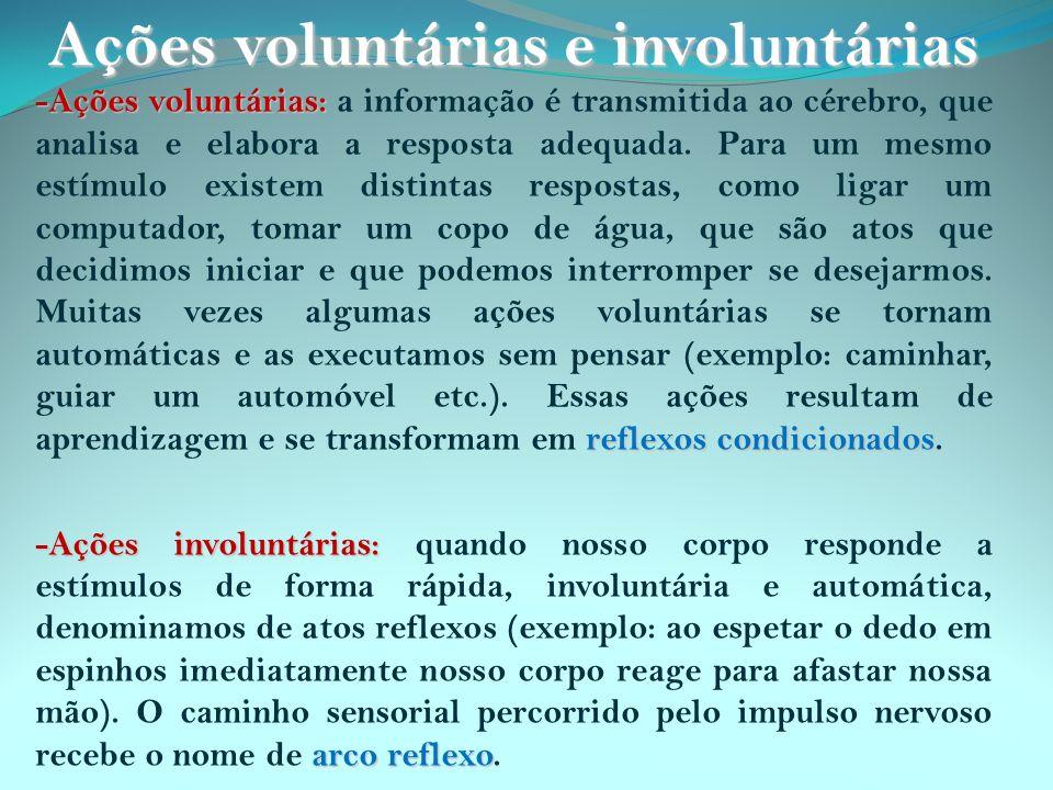 Ações voluntárias e involuntárias