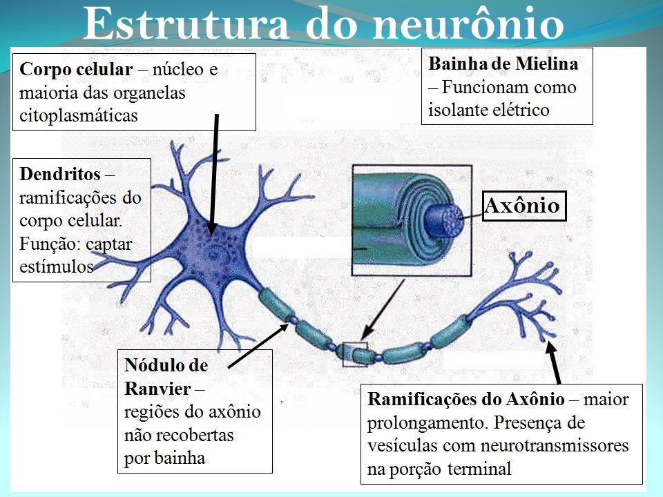 Estrutura do neurônio