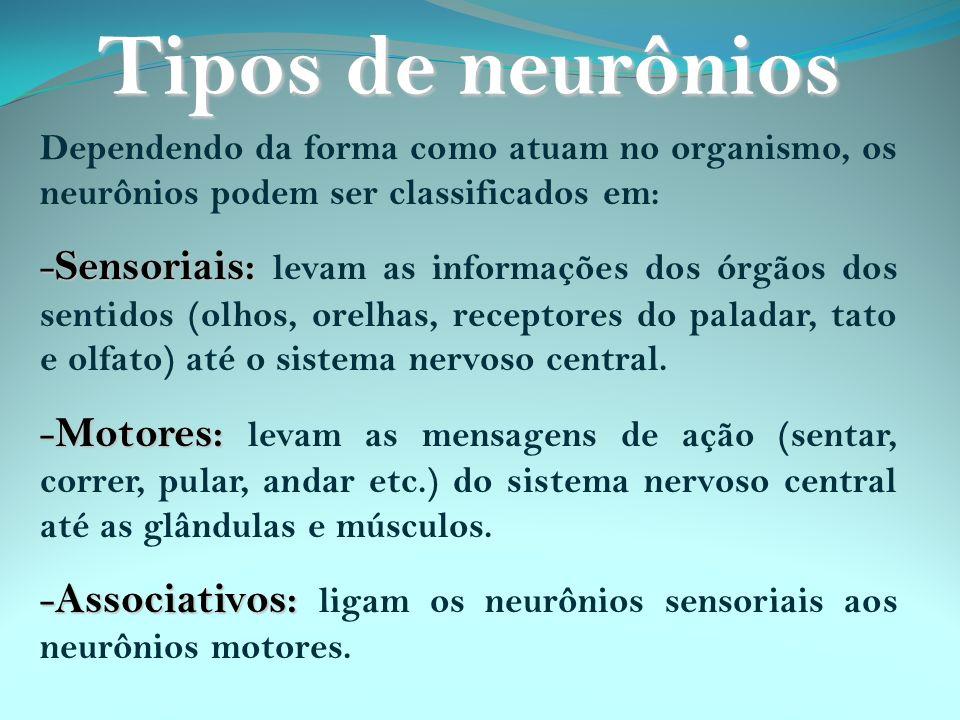 Tipos de neurônios Dependendo da forma como atuam no organismo, os neurônios podem ser classificados em: