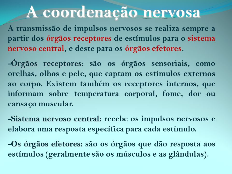 A coordenação nervosa