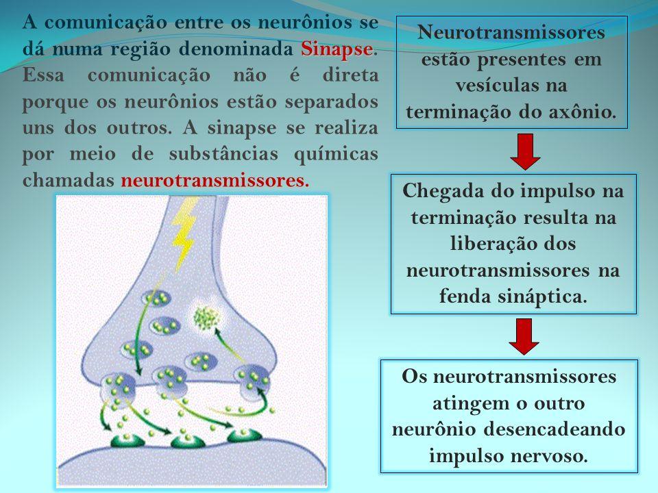 A comunicação entre os neurônios se dá numa região denominada Sinapse