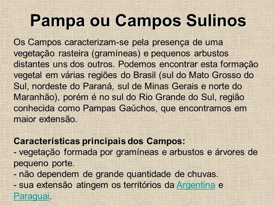 Pampa ou Campos Sulinos