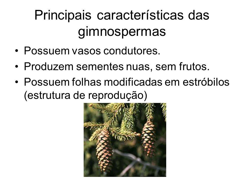 Principais características das gimnospermas