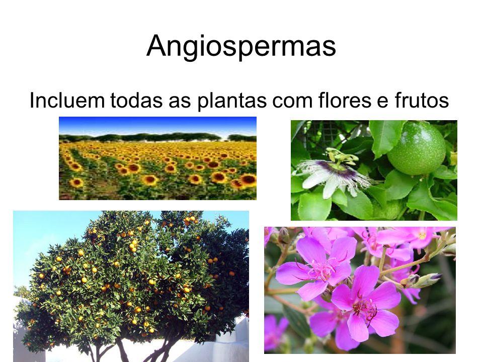 Angiospermas Incluem todas as plantas com flores e frutos
