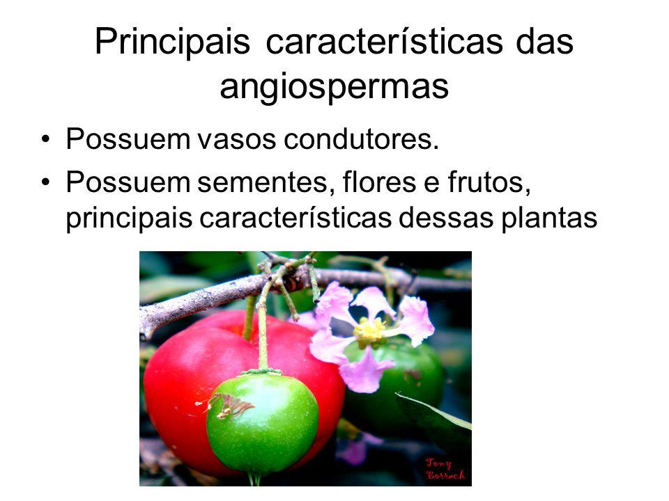 Principais características das angiospermas