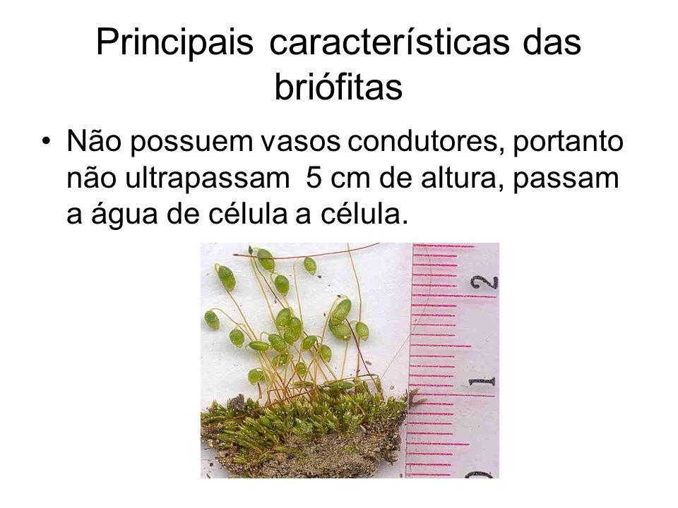 Principais características das briófitas