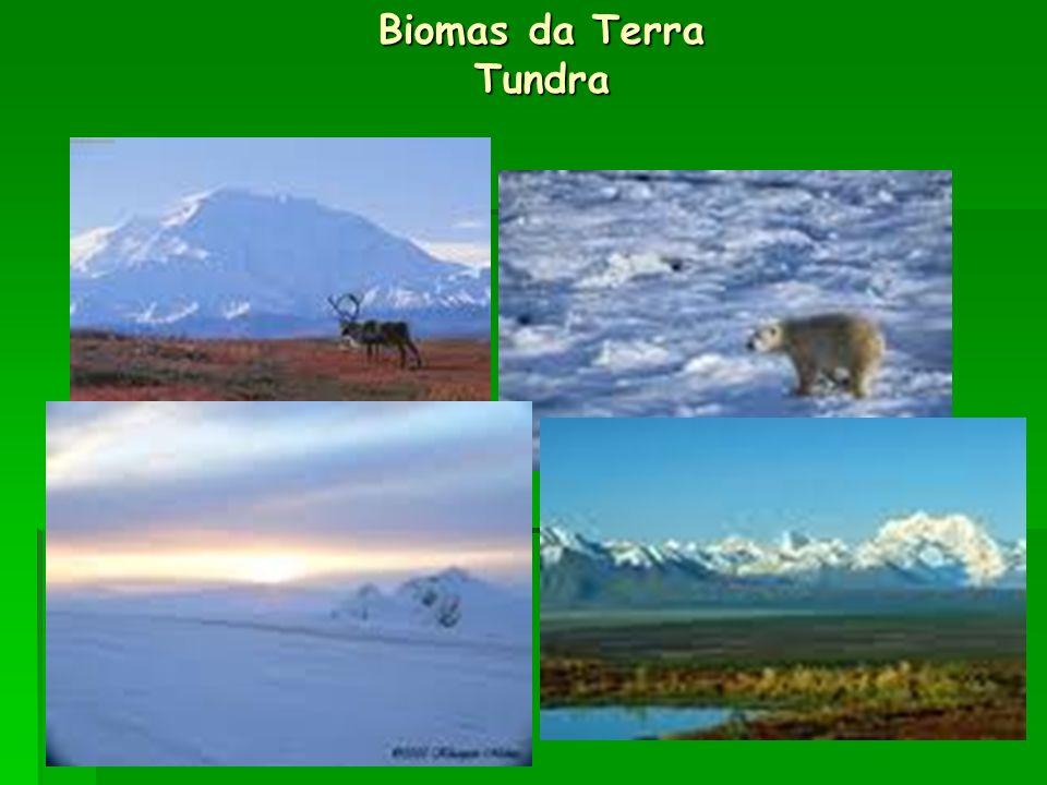Biomas da Terra Tundra