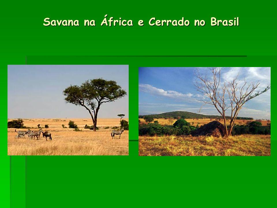 Savana na África e Cerrado no Brasil
