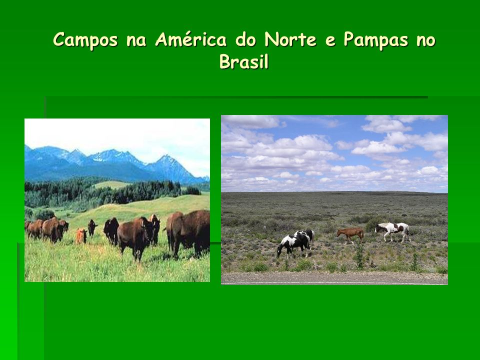 Campos na América do Norte e Pampas no Brasil