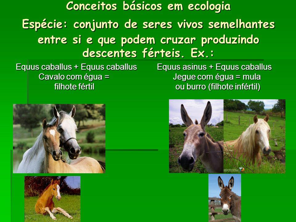Conceitos básicos em ecologia Espécie: conjunto de seres vivos semelhantes entre si e que podem cruzar produzindo descentes férteis. Ex.: