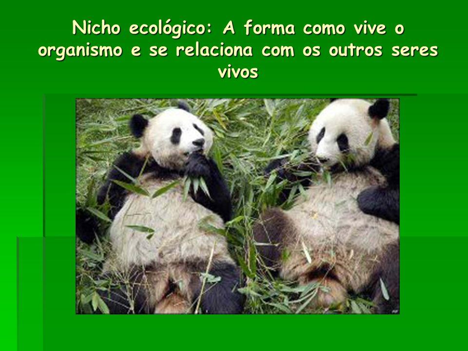Nicho ecológico: A forma como vive o organismo e se relaciona com os outros seres vivos