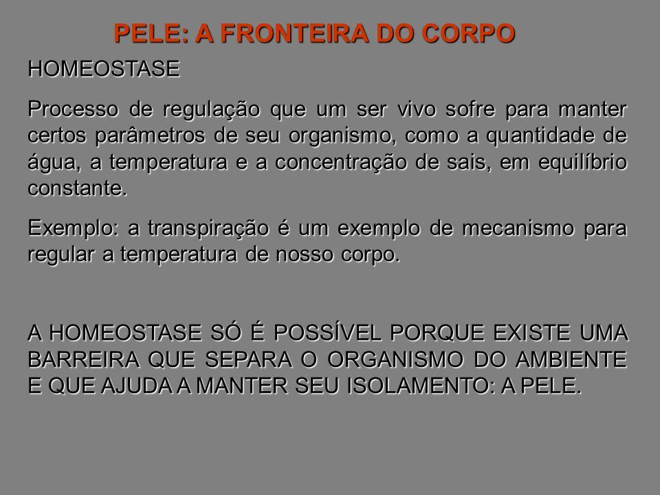 PELE: A FRONTEIRA DO CORPO
