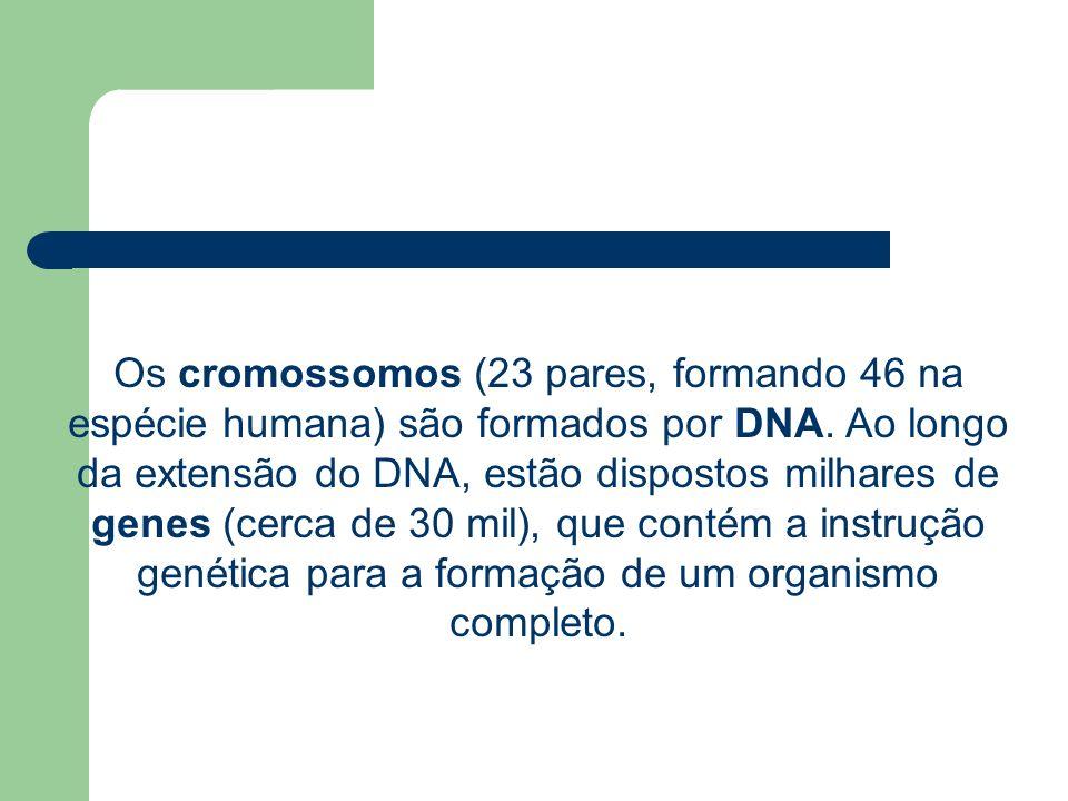 Os cromossomos (23 pares, formando 46 na espécie humana) são formados por DNA.