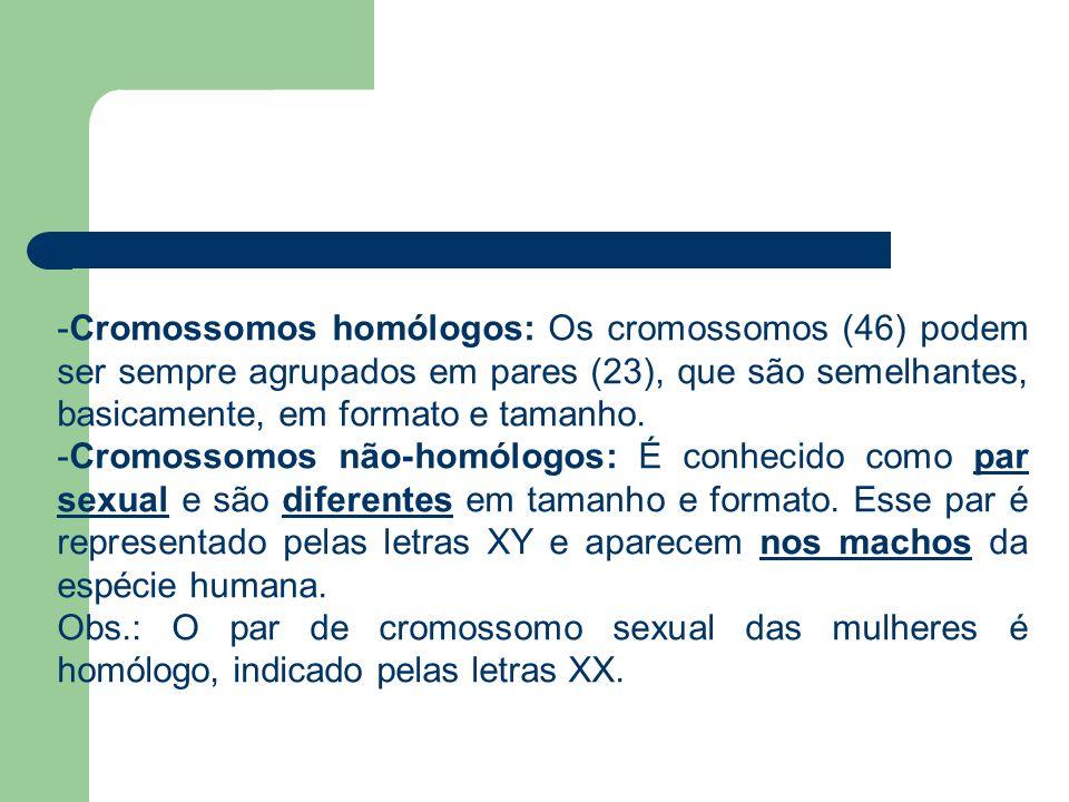 Cromossomos homólogos: Os cromossomos (46) podem ser sempre agrupados em pares (23), que são semelhantes, basicamente, em formato e tamanho.