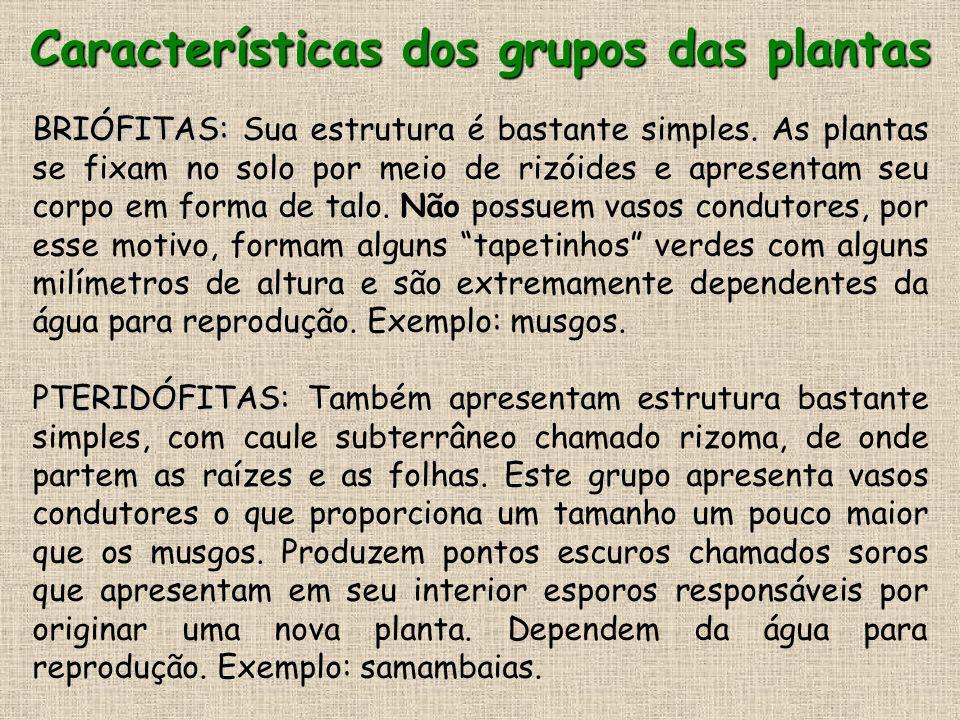 Características dos grupos das plantas
