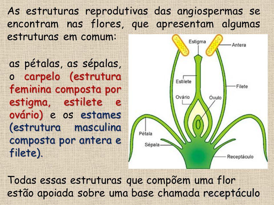 As estruturas reprodutivas das angiospermas se encontram nas flores, que apresentam algumas estruturas em comum: