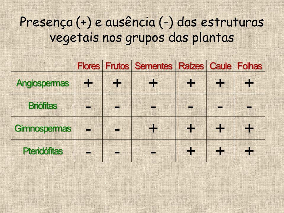 Presença (+) e ausência (-) das estruturas vegetais nos grupos das plantas