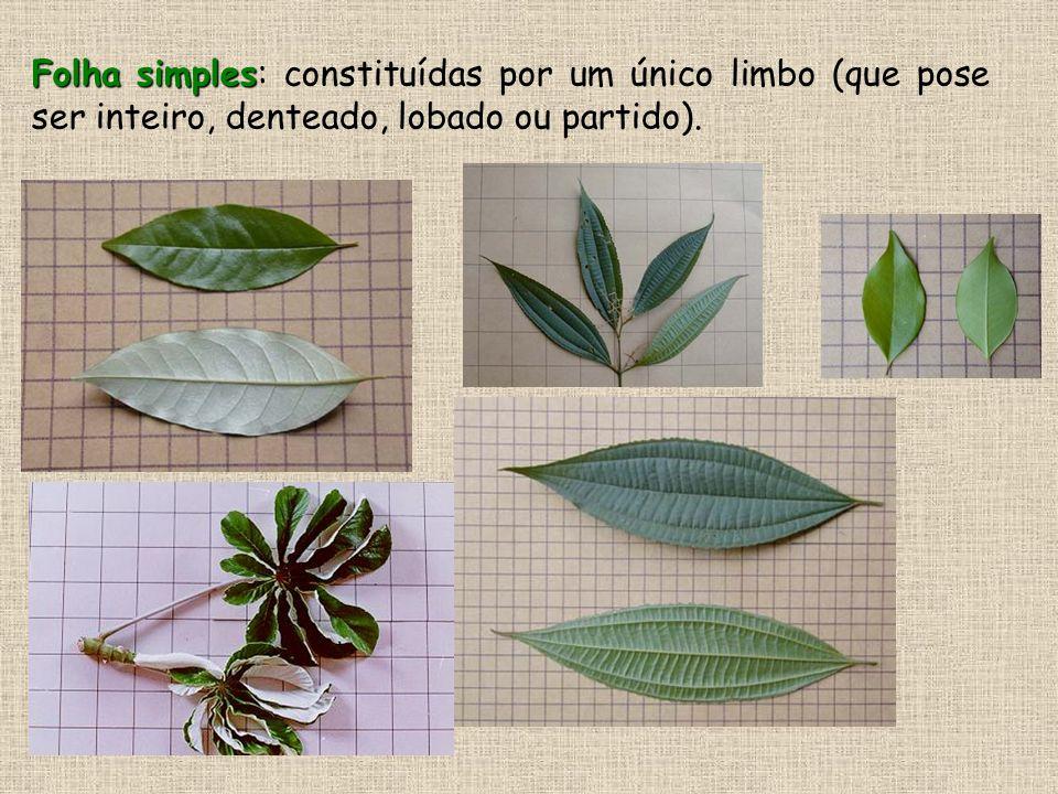 .Folha simples: constituídas por um único limbo (que pose ser inteiro, denteado, lobado ou partido).