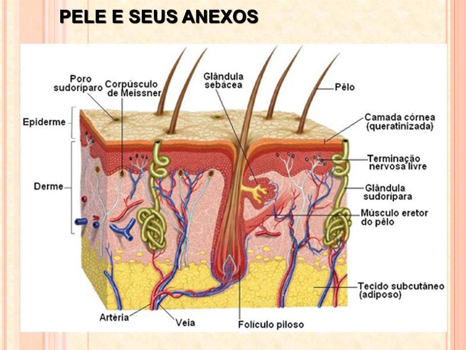 PELE E SEUS ANEXOS