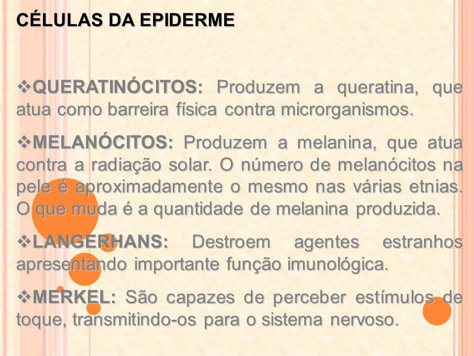 CÉLULAS DA EPIDERMEQUERATINÓCITOS: Produzem a queratina, que atua como barreira física contra microrganismos.