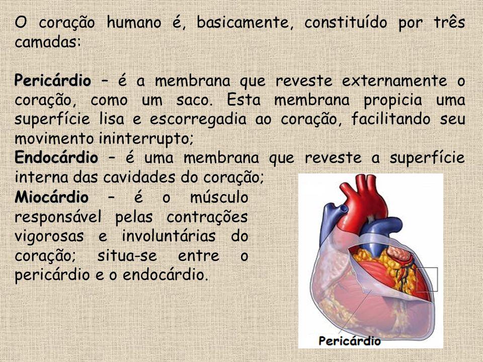 O coração humano é, basicamente, constituído por três camadas: