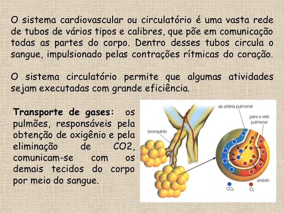O sistema cardiovascular ou circulatório é uma vasta rede de tubos de vários tipos e calibres, que põe em comunicação todas as partes do corpo. Dentro desses tubos circula o sangue, impulsionado pelas contrações rítmicas do coração. O sistema circulatório permite que algumas atividades sejam executadas com grande eficiência.