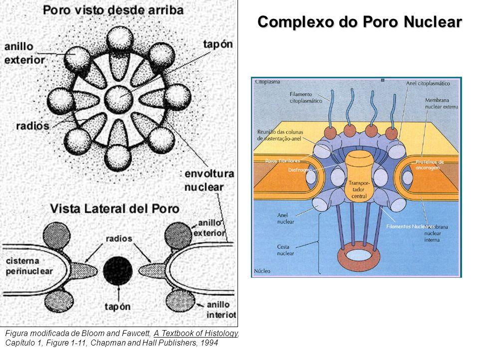 Complexo do Poro Nuclear