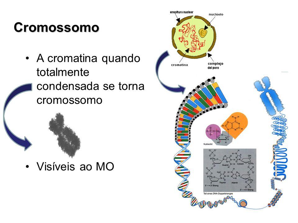 Cromossomo A cromatina quando totalmente condensada se torna cromossomo Visíveis ao MO