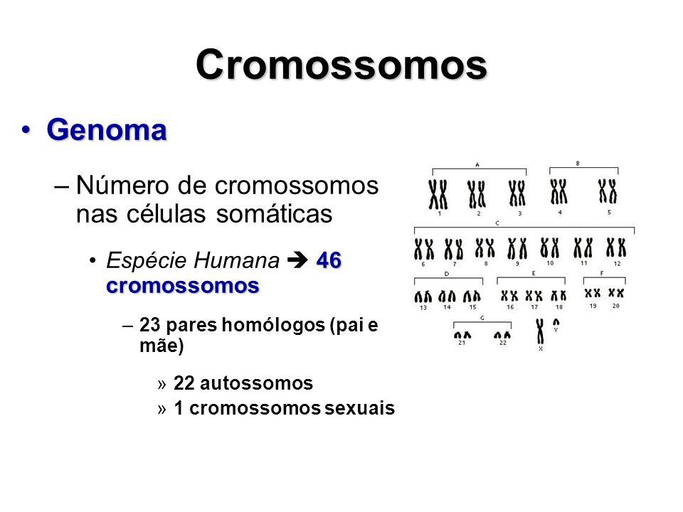 Cromossomos Genoma Número de cromossomos nas células somáticas