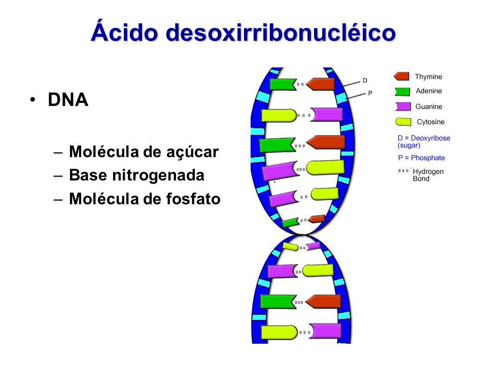 Ácido desoxirribonucléico