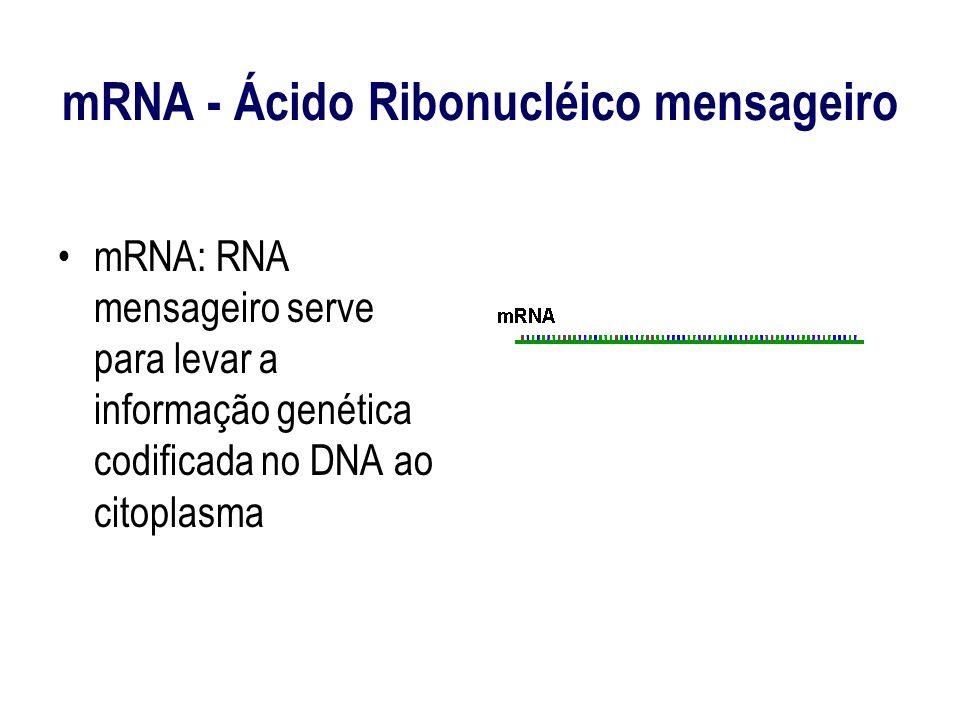 mRNA - Ácido Ribonucléico mensageiro