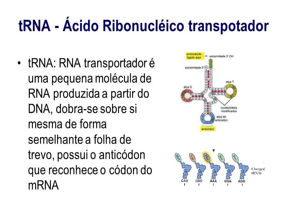 tRNA - Ácido Ribonucléico transpotador