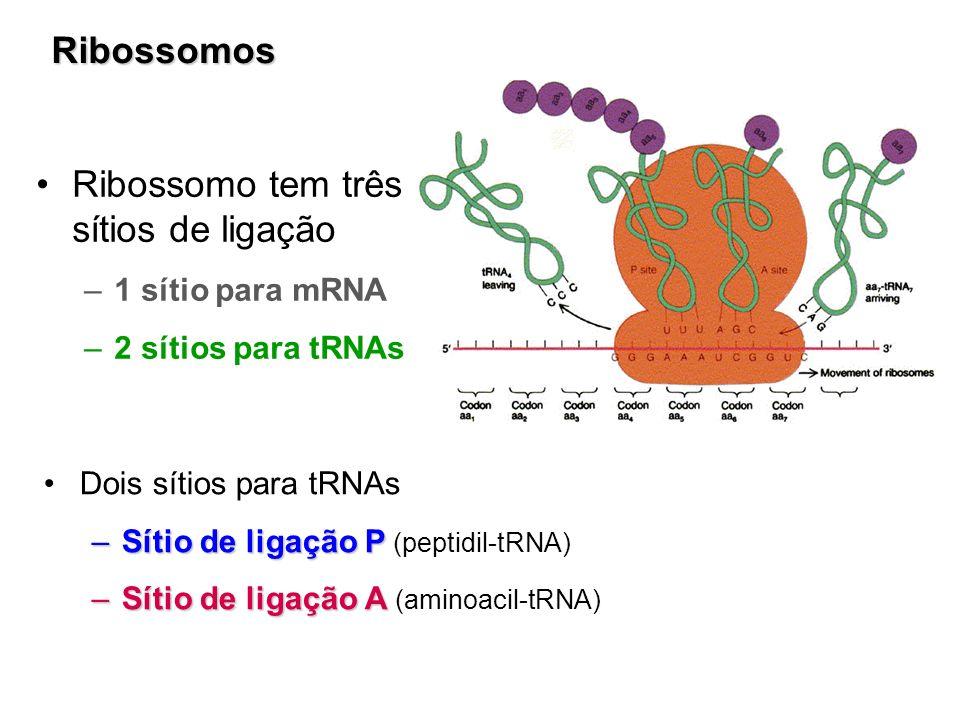 Ribossomo tem três sítios de ligação