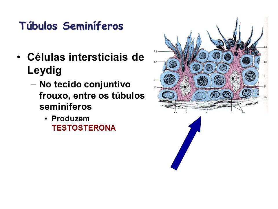 Células intersticiais de Leydig