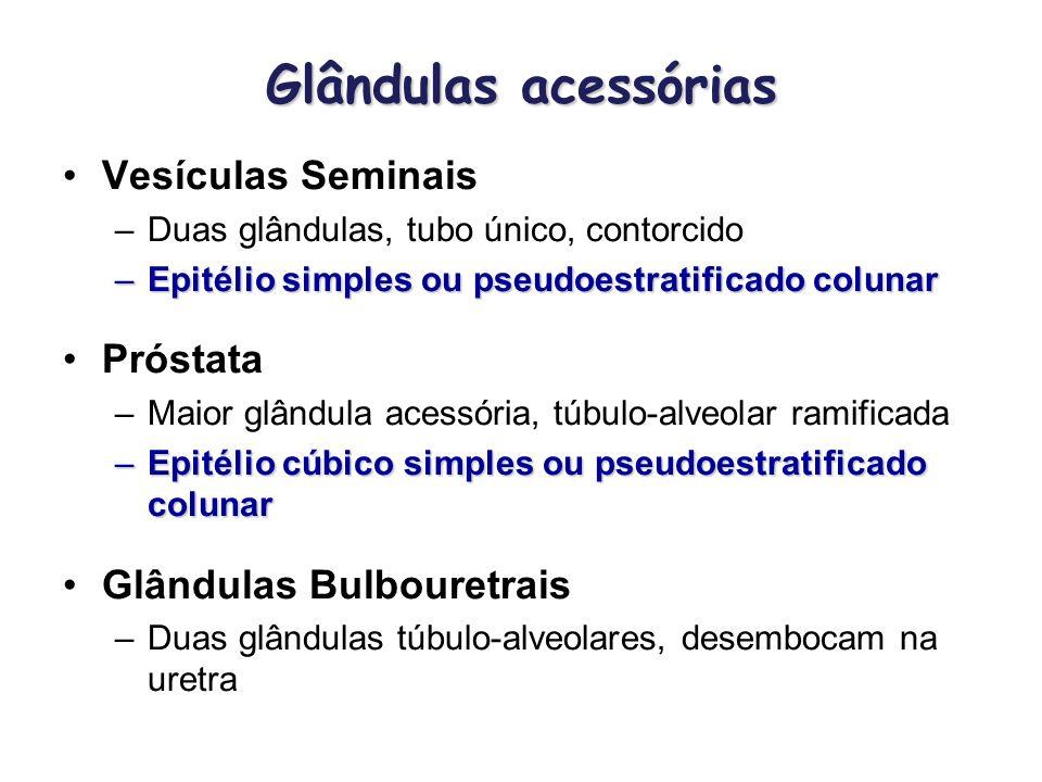 Glândulas acessórias Vesículas Seminais Próstata