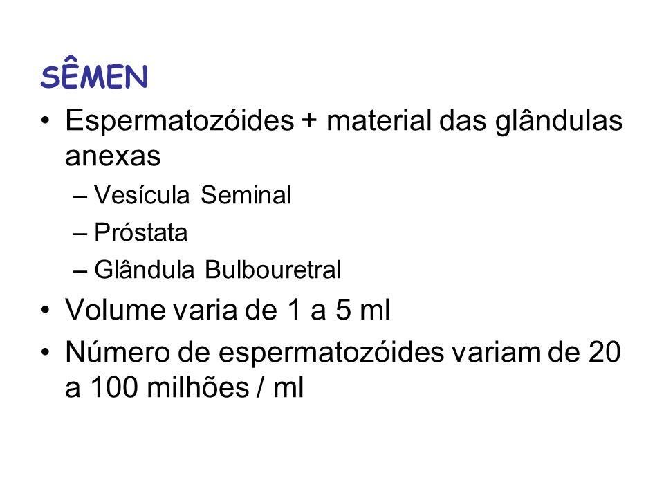 Espermatozóides + material das glândulas anexas