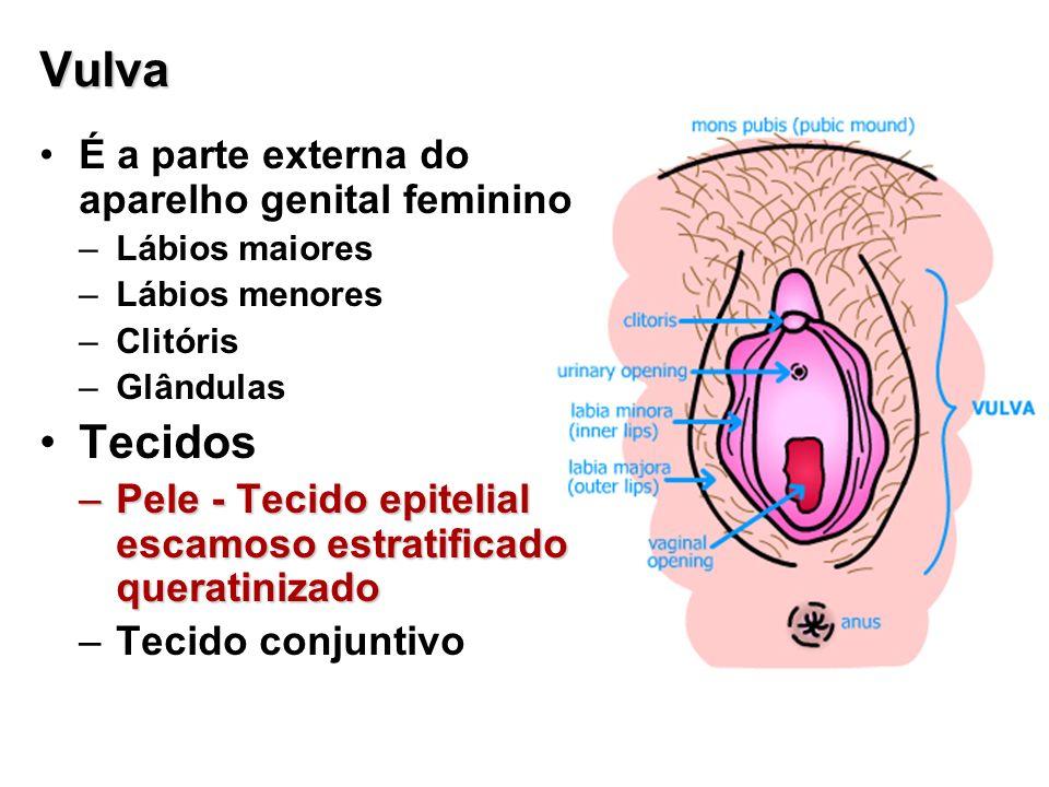 Vulva Tecidos É a parte externa do aparelho genital feminino