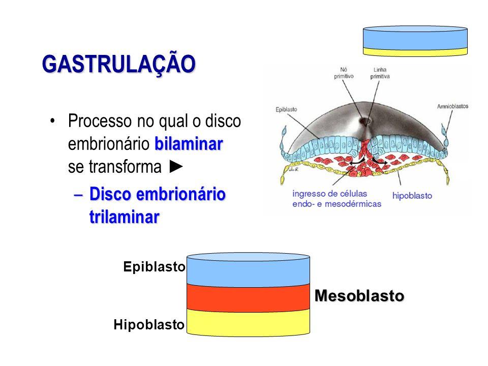 GASTRULAÇÃOProcesso no qual o disco embrionário bilaminar se transforma ► Disco embrionário trilaminar.
