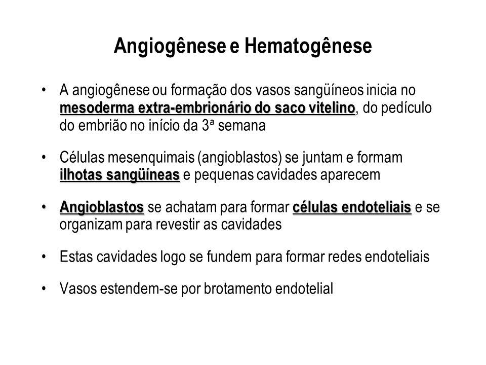 Angiogênese e Hematogênese
