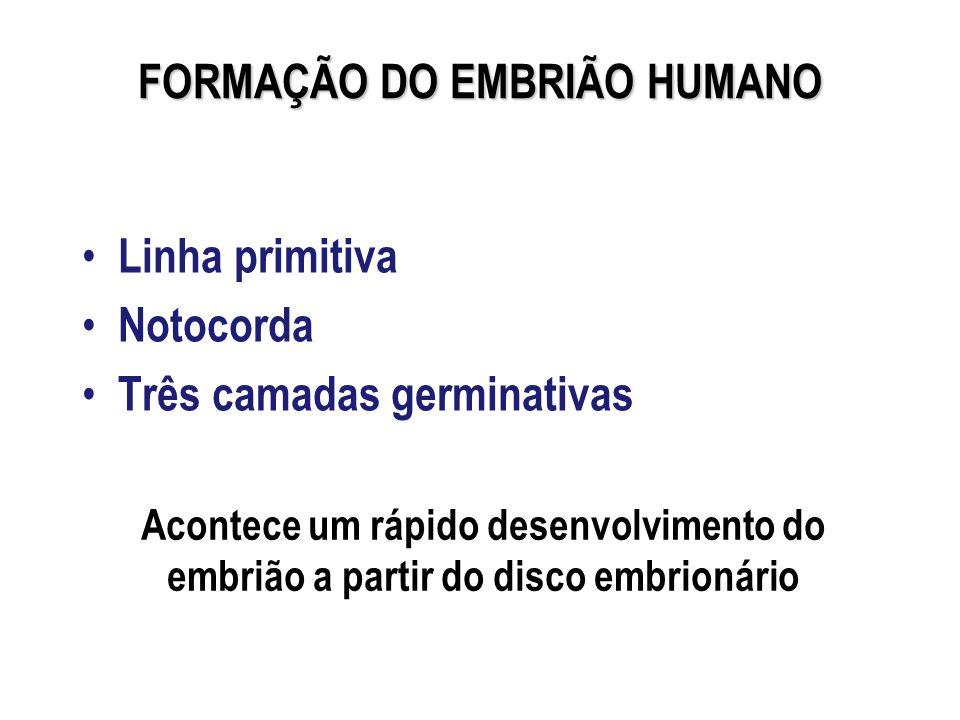 FORMAÇÃO DO EMBRIÃO HUMANO