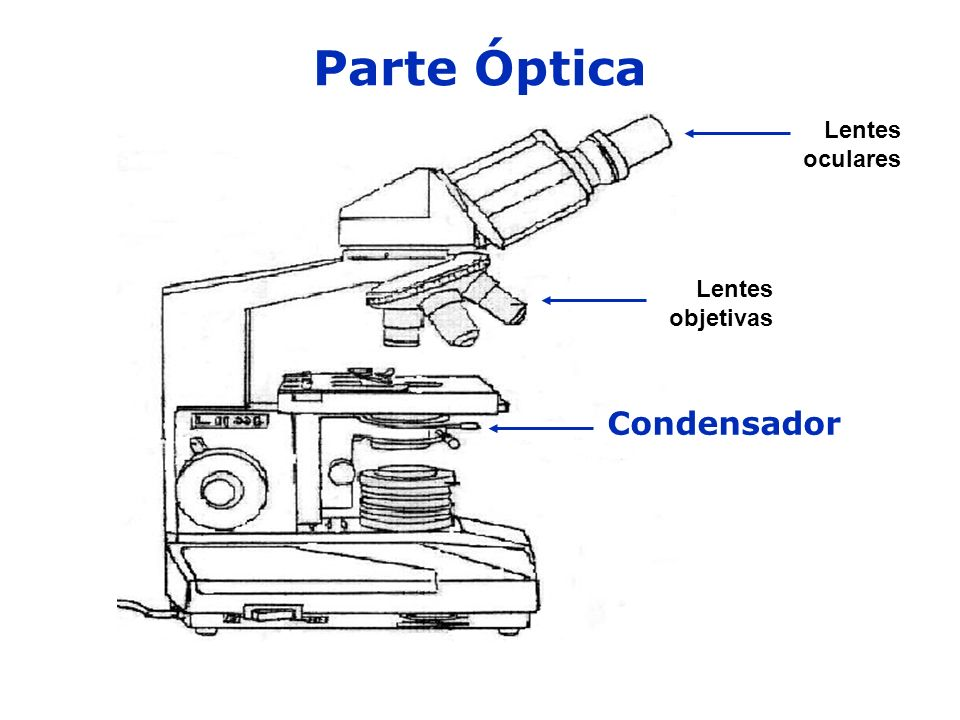 Parte Óptica Lentes oculares Lentes objetivas Condensador