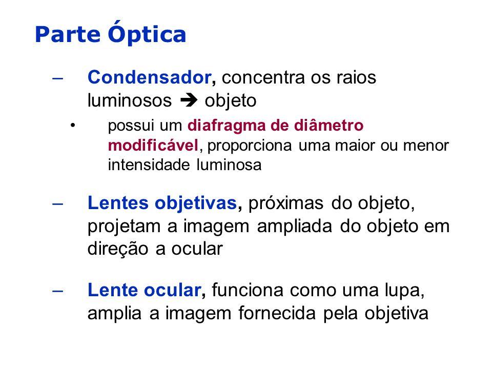 Parte Óptica Condensador, concentra os raios luminosos  objeto