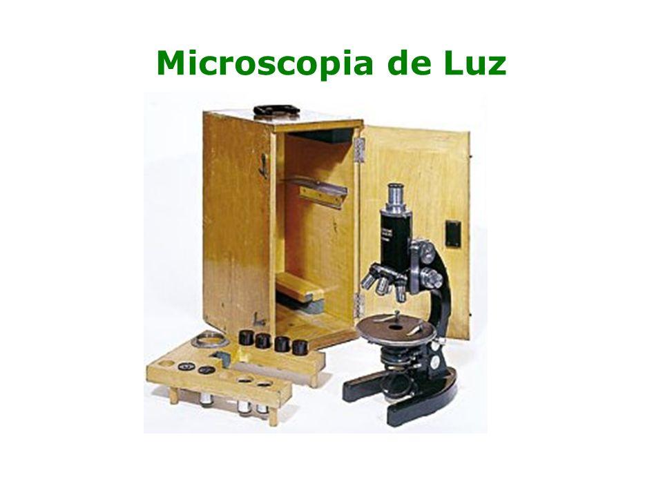 Microscopia de Luz Por 200 anos o microscópio permaneceu como um objeto exótico – Louis Pasteur, microrganismos.