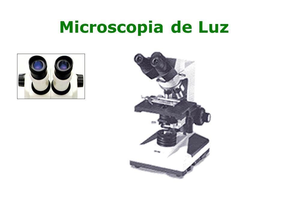 Microscopia de Luz