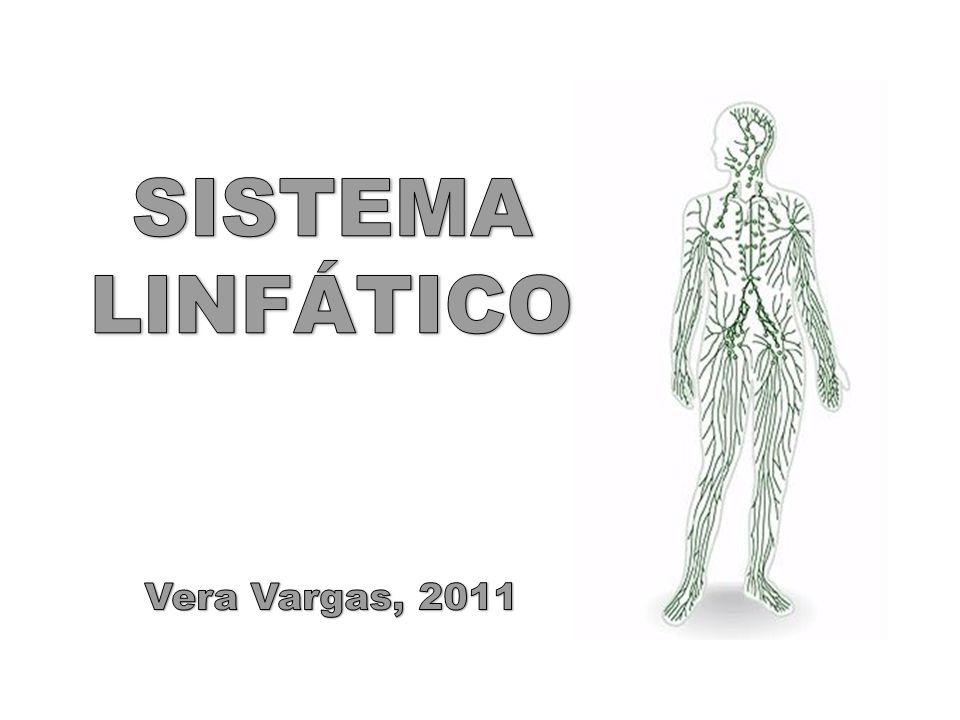 SISTEMA LINFÁTICO Vera Vargas, 2011