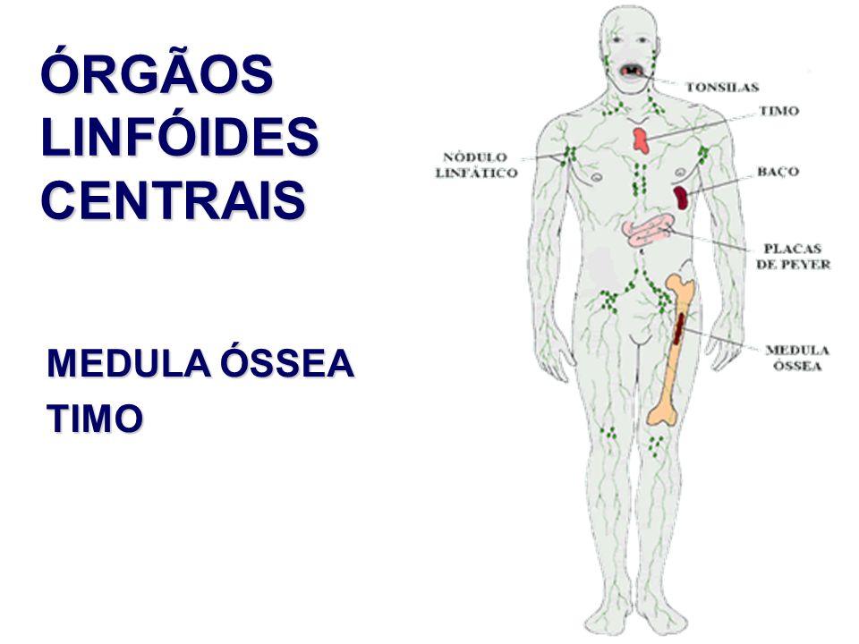 ÓRGÃOS LINFÓIDES CENTRAIS