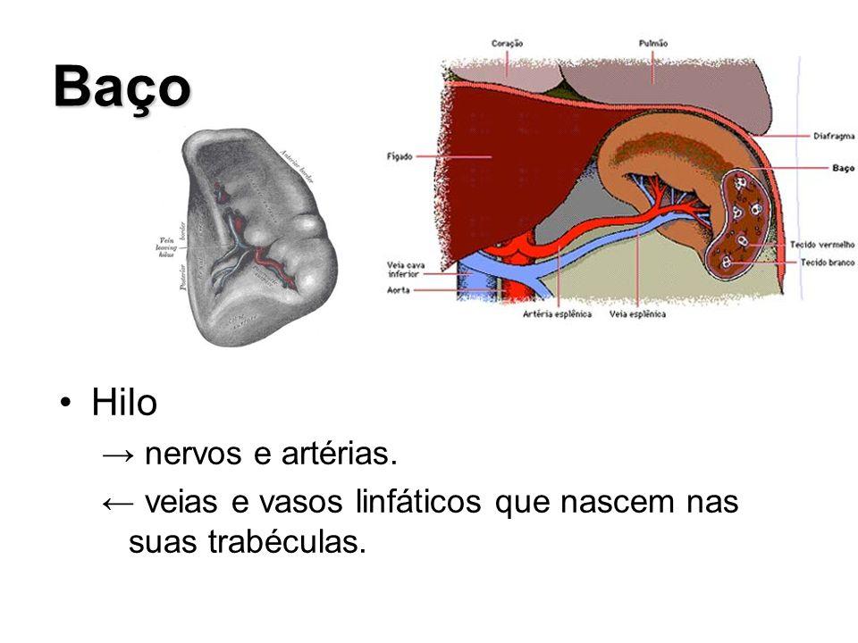 Baço Hilo → nervos e artérias.