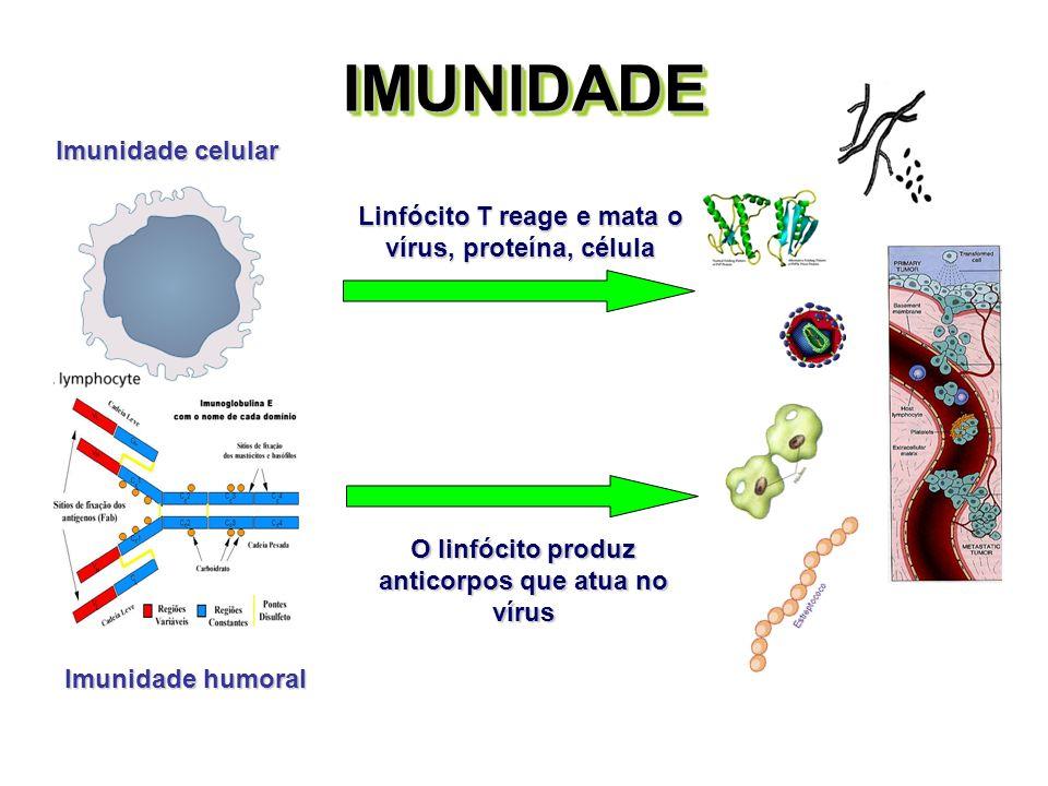 IMUNIDADE Imunidade celular