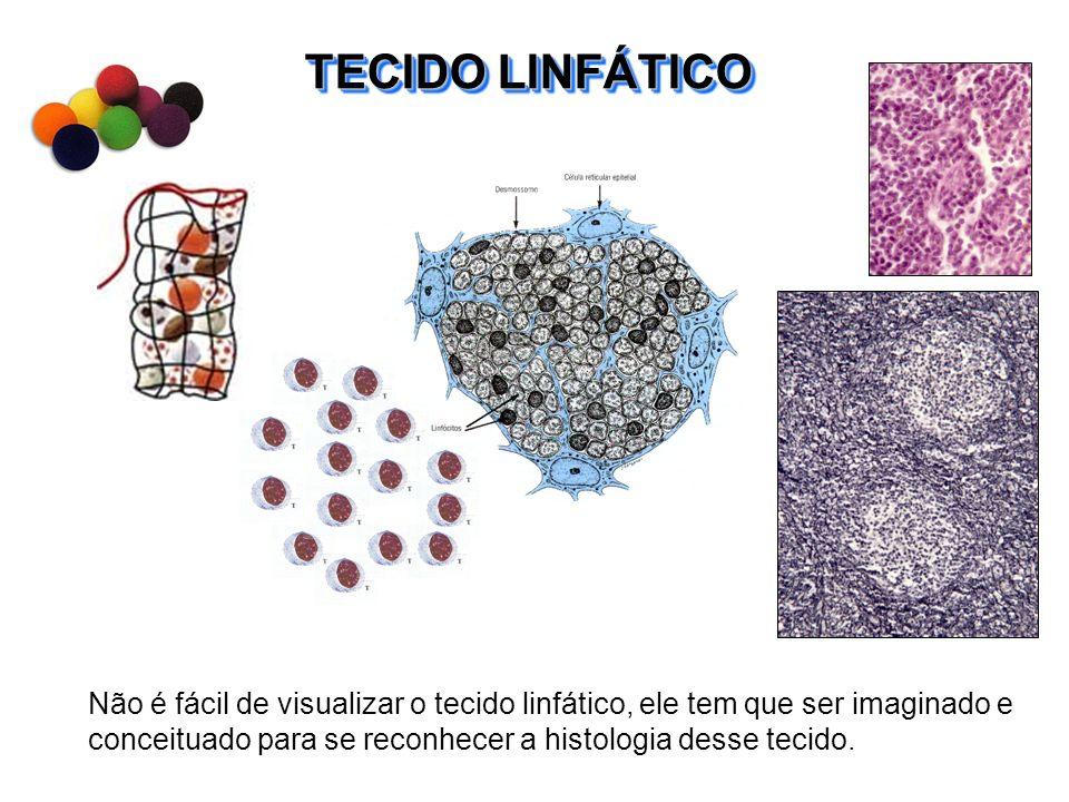 TECIDO LINFÁTICO Não é fácil de visualizar o tecido linfático, ele tem que ser imaginado e conceituado para se reconhecer a histologia desse tecido.