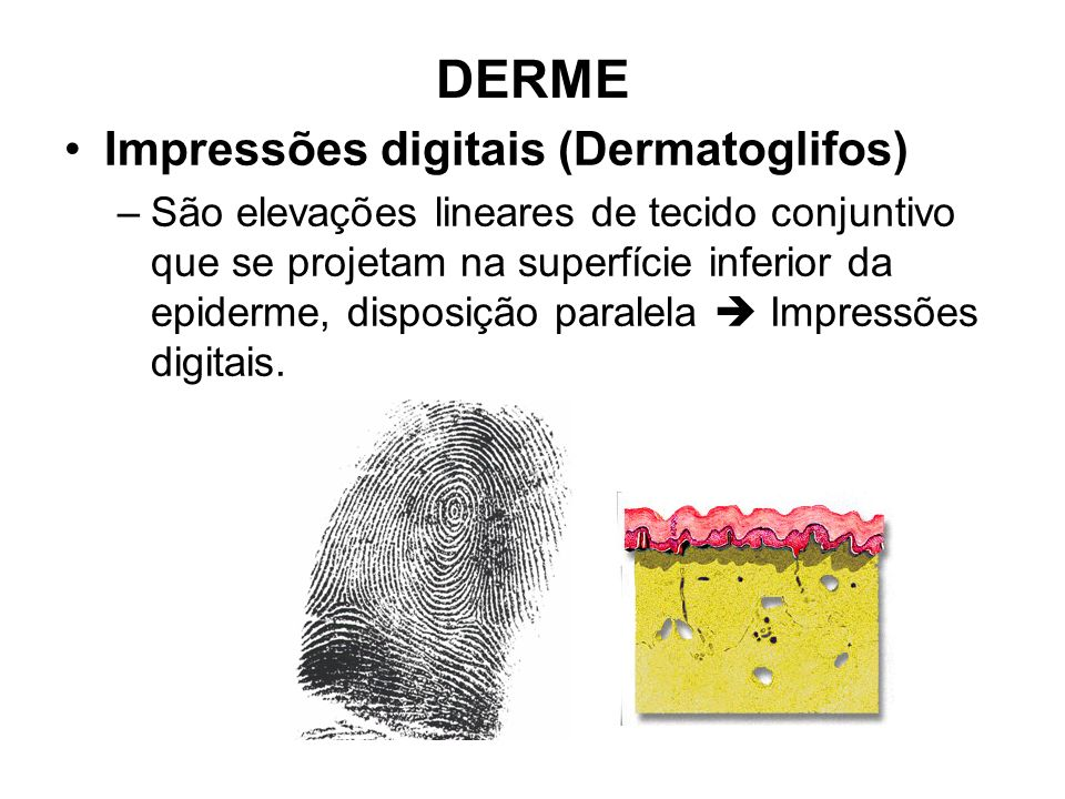 DERME Impressões digitais (Dermatoglifos)